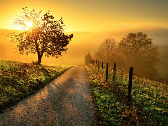country road with golden sunshine