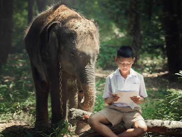 young elephant standing beside boy sitting on a log reading