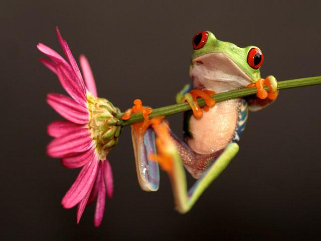 flower-tree-frog_si.jpg