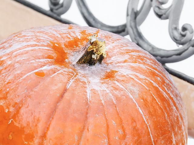 a pumpkin with frost on it