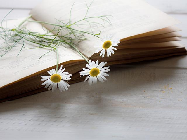 daisy flowers laying across a book