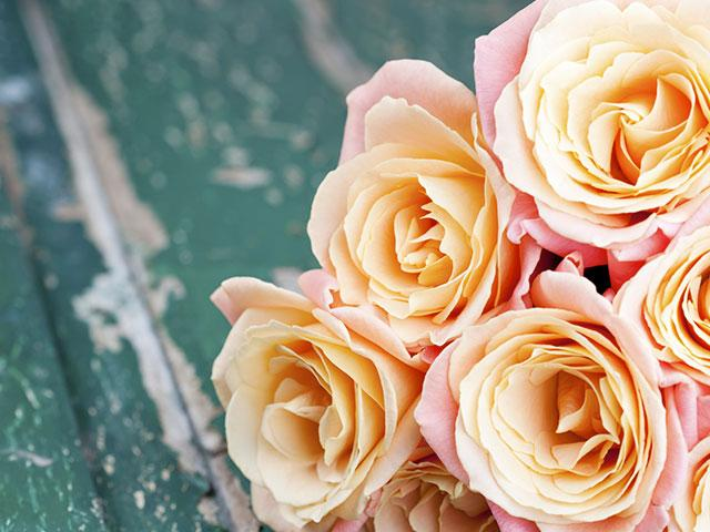 roses_orange
