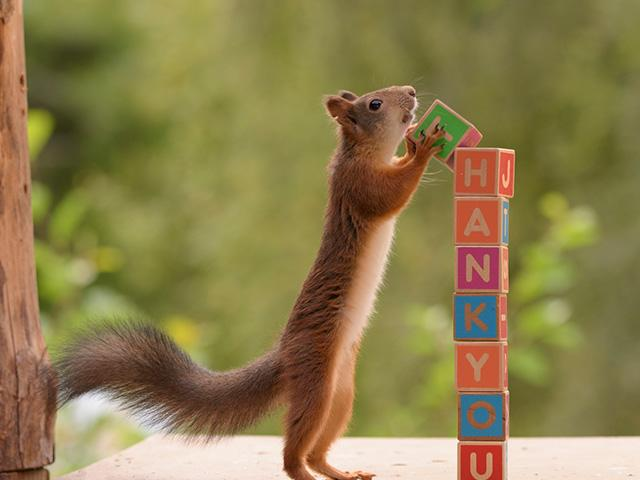 thank-you-squirrel_SI.jpg